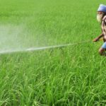 Understanding Indian Agriculture: Main problems in this sector